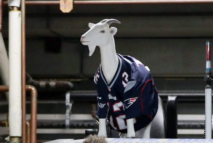 BOSTON, MA - FEBRUARY 03: A goat with the jersey of New England Patriots quarterback Tom Brady sits atop the ice resurfacing machine in support of the Patriots in Super Bowl LII before a game between the Boston Bruins and The Toronto Maple Leafs on February 3, 2018, at TD Garden in Boston, Massachusetts. (Photo by Fred Kfoury III/Icon Sportswire via Getty Images)