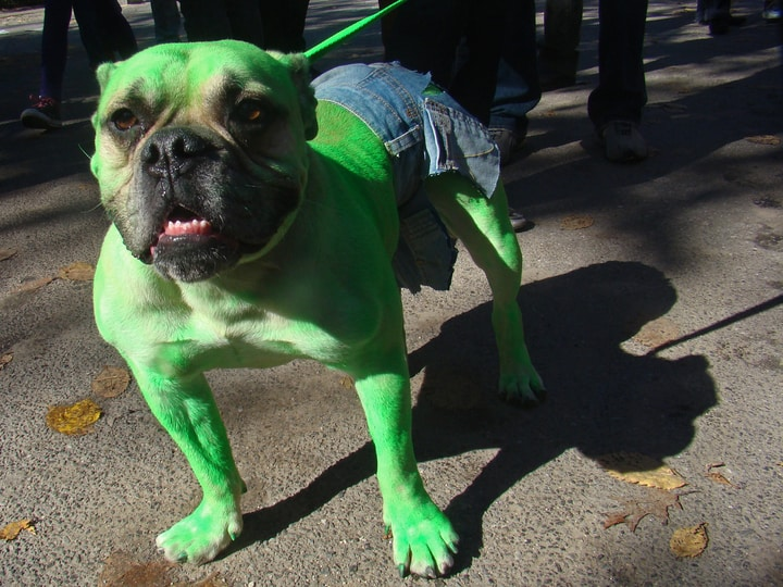 Hulk dog costume Halloween parade