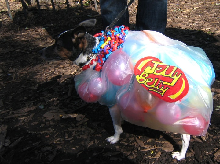 Jelly Belly dog costume Halloween parade