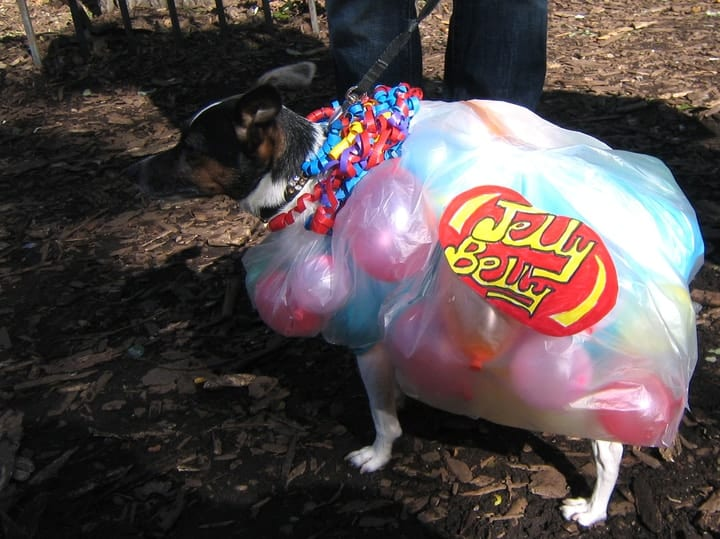 Jelly belly dog halloween costume