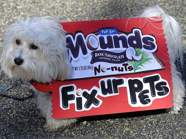 Mounds dog halloween candy costume
