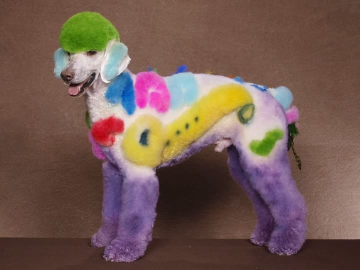 Creative grooming dog competition