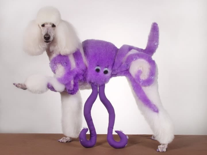 Creative dog grooming octopus competition