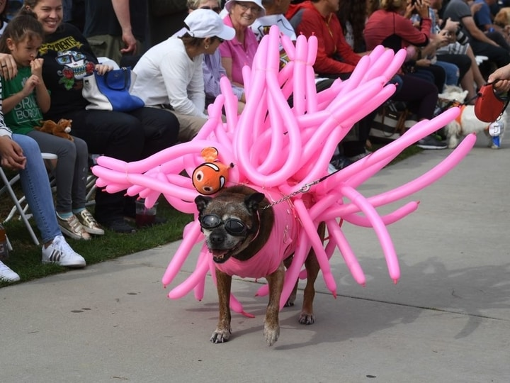 Sea anemone dog halloween costume