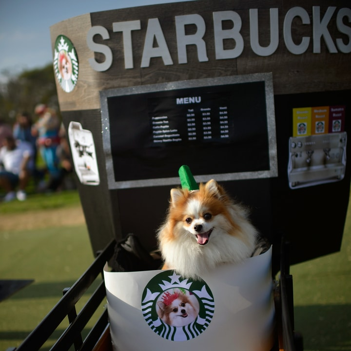 Starbucks dog costume halloween parade