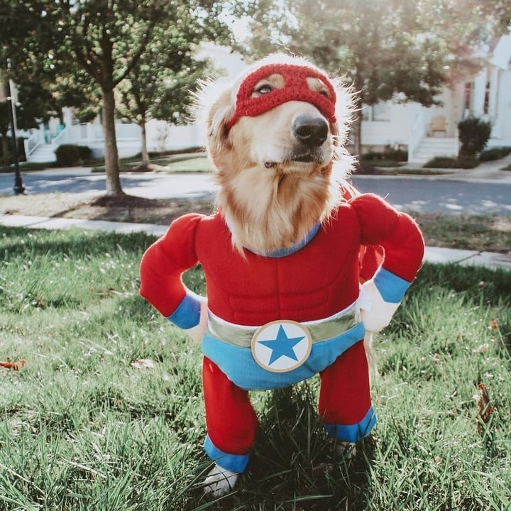 Superhero dog costume Halloween
