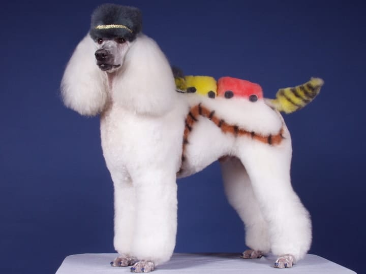 Creative dog grooming competition