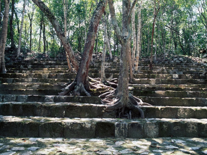 A pyramid among trees in Balamku, Campeche, Mexico. Mayan civilisation, 4th-7th century.