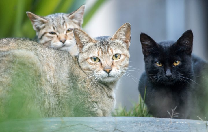 Portrait of shot of cat family living in the nature.