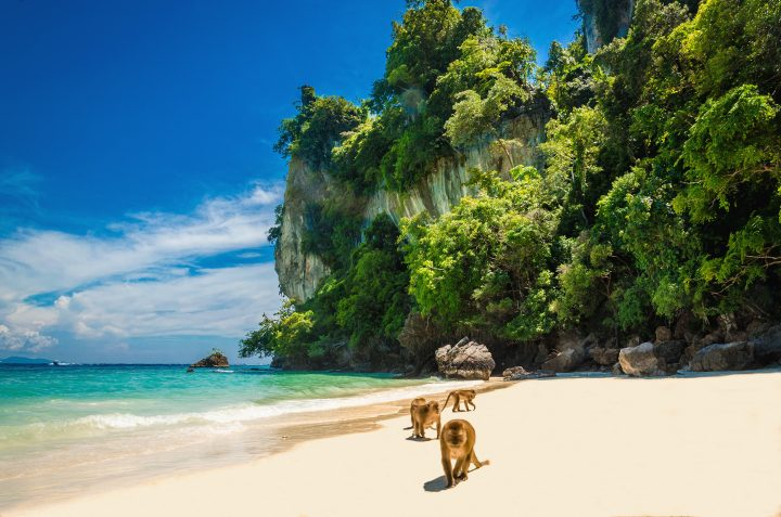 Monkeys waiting for food in Monkey Beach, Phi Phi Islands, Thailand