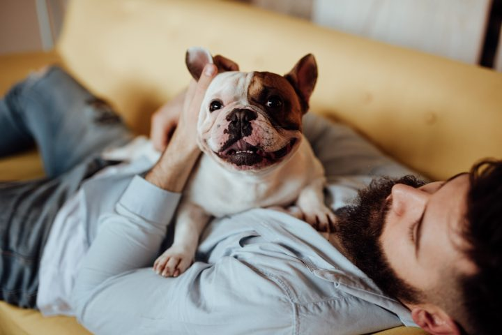 30 of the best dog breeds for your lifestyle