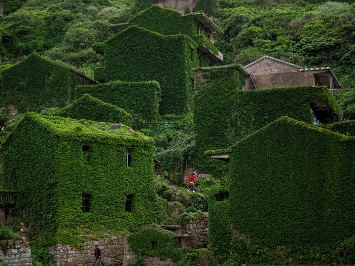 This picture taken on May 31, 2018 shows a villager walking between abandoned houses covered with overgrown vegetation in Houtouwan on Shengshan island, China's eastern Zhejiang province. - Houtouwan was a thriving fishing community of sturdy brick homes that climb up the steeply hilled island of Shenghshan, but is now abandoned, with entire houses completely overgrown as if vacuum-sealed in a lush layer of green