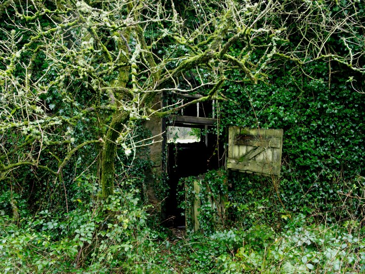 Overgrown building, Penpol, Falmouth, Cornwall, UK