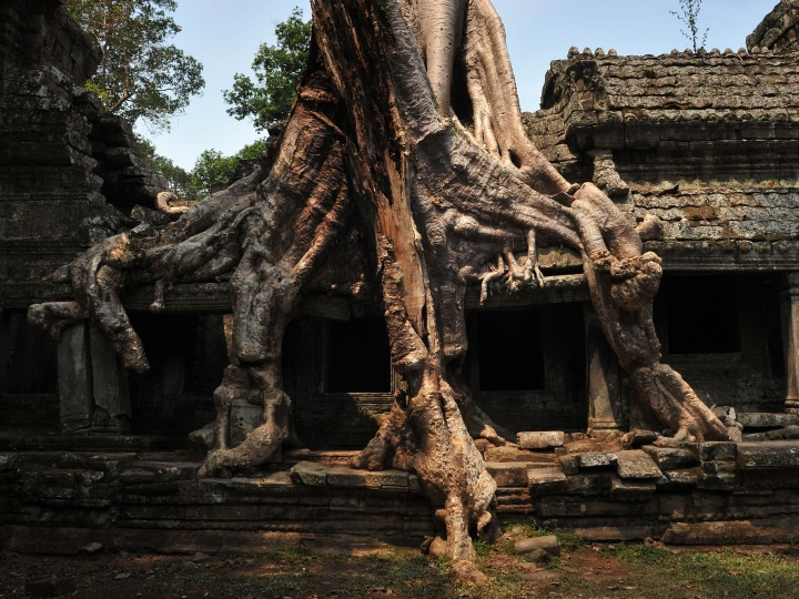 The roots of a tree tangle over the ruins of the 12th century Buddhist temple of Preah Khan (Khmer for 'Royal Sword'), part of the Angkor complex on March, 2012 in Siem Reap, Cambodia.