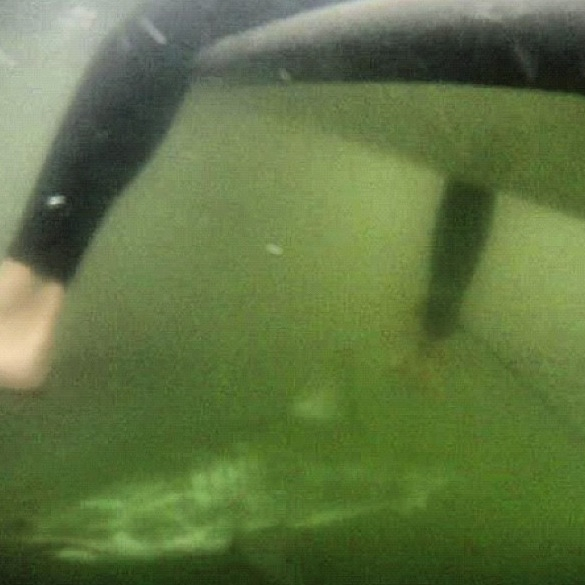 shark circling, underwater, close call