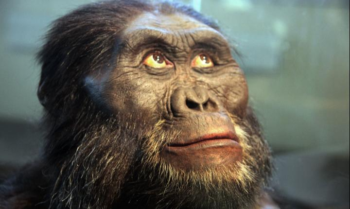 Forensic reconstruction of A. afarensis