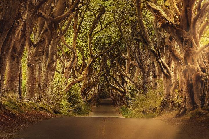 The Dark Hedges Forest in Ireland